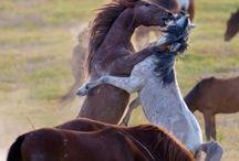 Horses/Wild