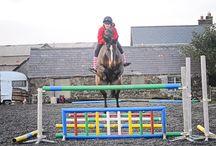 equine training