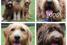How to's - Grooming / Dog grooming