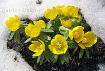 Подснежники и первоцветы / Появилось первое солнышко, а значит, вместе с ним скоро начнут радовать глаз первые весенние цветы - подснежники или первоцветы.