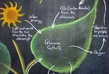 Homeschooling Chalkboards