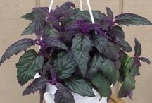 purple plant / by Debbie Smith
