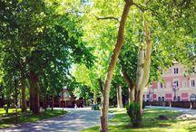 Into the park / Il Parco della Montagnola nell'occhio della photo-camera, catturando scorsi, dettagli e momenti di vita.
