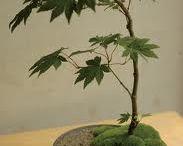 Bonsai & zen & Japanese gardens