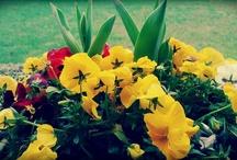 I fiori che non colsi