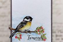 Birds cards