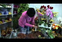 záhradkár radí -----