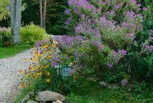landscaping inspo