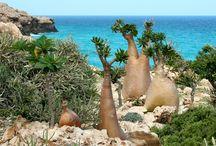 Vacation Socotra
