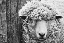Wild en wooly