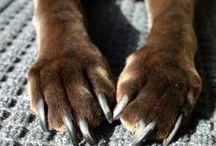Dog Care Tips / dog skin care tips | diy dog care tips | dog care 101 | dog care health tips