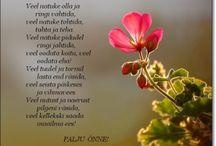 luuletused