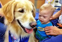 Therapy and Rescue Dogs / by Julie Kidder