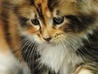 • Cat •