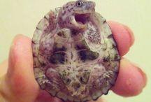 Turtles /  turtles