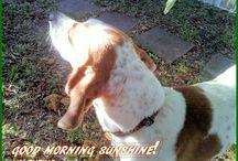 Nuttin' But Sunshine!