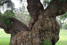 Loving Trees