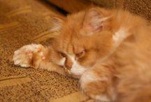 Гарфик диванное Котэ / Жизнь и приключения кота Гарфика в картинках