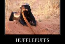 Hufflepuff-Hufflepride