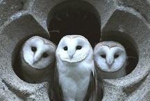 Cats, Owls, mishimishi stuff :)