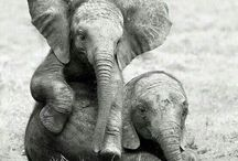 Elephants too / by Bonnie Barnert