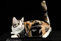 Beautiful Cats / Beautiful cats from around the world.