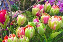 Lente season