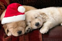 Christmas! / Christmas is just as exciting for our pets as it is for us!