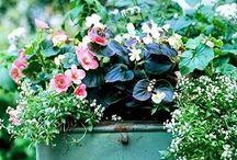 Blommor, krukor och arrangemang