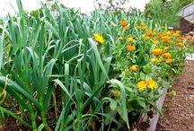 Сад и огород.