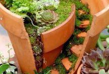 Inspiracje ogrodowe