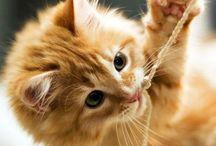 kucing manis