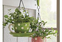 Jardinería / Jardinería, huerto en casa, huerto en maceta
