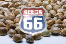 Seeds66