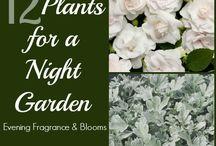 A moon garden