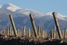 Wine Tours / Viajá, Jugá, Divertite, Disfrutá, Animaté, Conocé, Recorré, Aprendé, con MendozaTour.Com