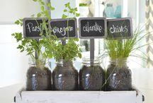 frascos con plantas