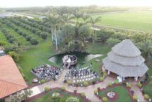 Wedding Highlight Videos / Wedding highlight videos, and some wedding videos with drone.