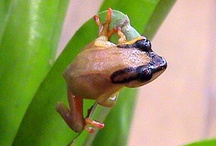 Frogs, because they're cool! / by Kathi McCann