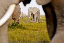 Elephunks