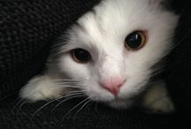 White cats / my lovely cat