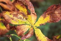 Herbstfrüchte 10 | 2012 / Die letzten Früchte und Blätter hängen an den Bäumen. Schon bald werden sie als Futter für die Tierwelt herhalten müssen.