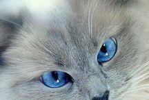 Kauniit kissat