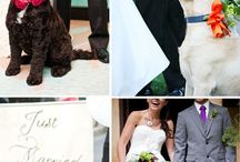 dog in wedding 