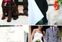 boda someday. .