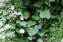 Secret Gardens / Green growings things and floral nirvana.....