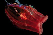 Viaţa subacvatică / Creaturi marine