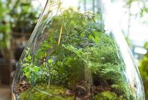 Florarium and not only ... a mini-garden with your own hands ...