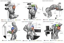 Τρικέφαλοι μύες