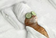 Pets & Animals | Thermae Mood / Thermae Abano Montegrotto and the purrfect holiday enjoyed by the cutest pets